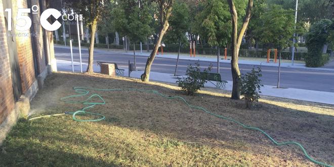 Una de las zonas verdes donde se ha recuperado el riego durante los últimos días