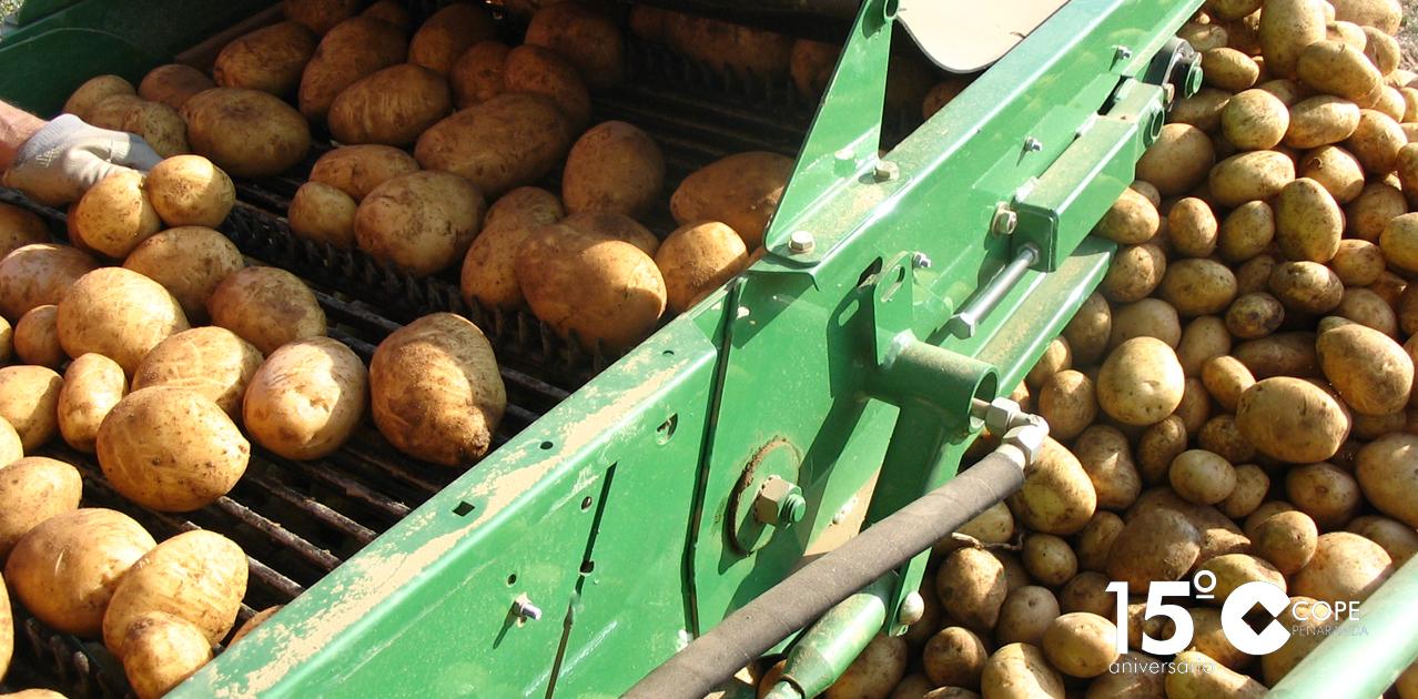Una cosechadora de patatas recogiendo este tubérculo en la comarca de Tierra de Peñaranda