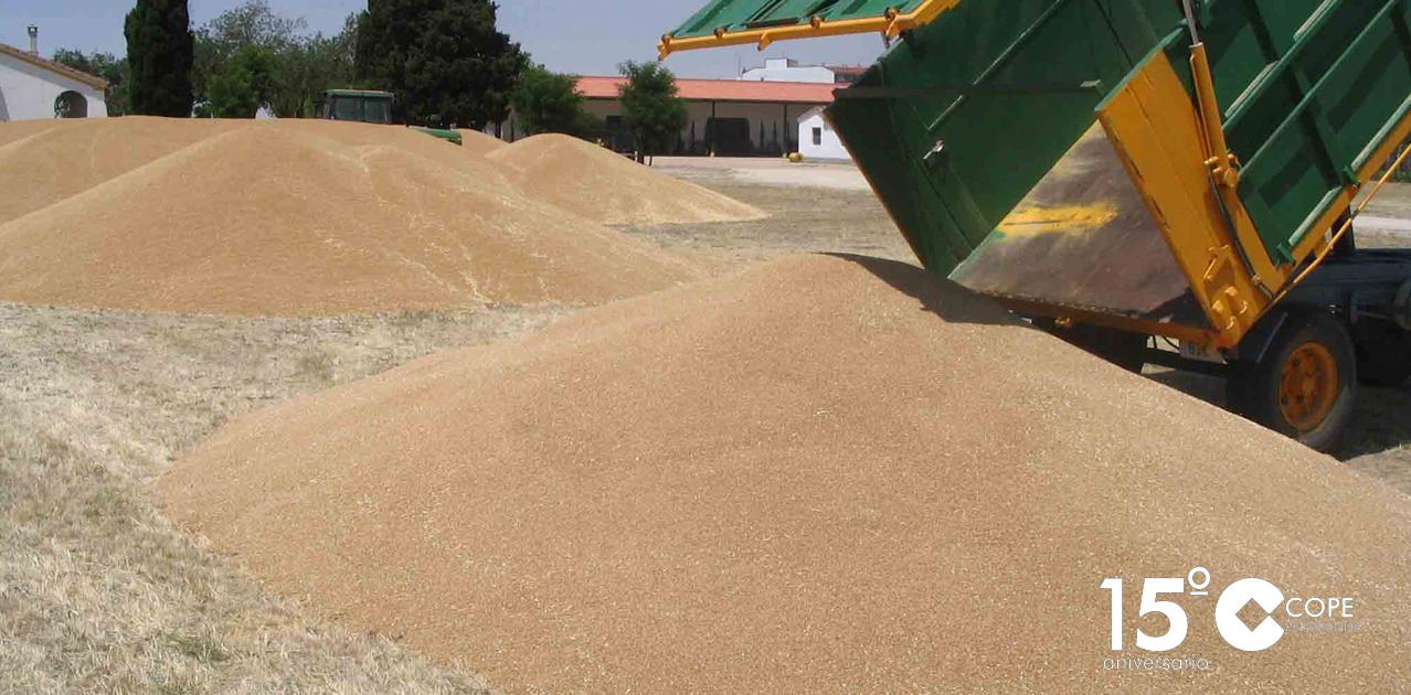 Montonera de trigo en unas eras en la comarca de Peñaranda.