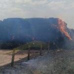 Montonera de alpacas en una finca ubicada en el término municipal de Cantalapiedra que ardieron esta tarde.