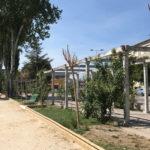 Algunos de los árboles que se han secado en el parque de los Jardines de Peñaranda.