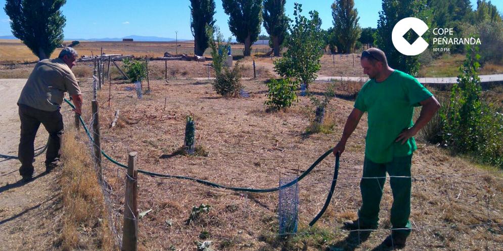 La Asociación Áreas verdes comprobó el estado de los árboles que se plantaron en Rágama.