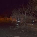 Los bomberos del parque comarcal de Peñaranda retiraron un árbol caído en la calle Medina.