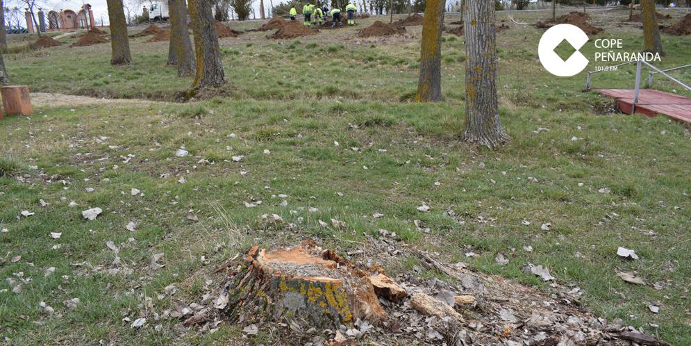 Situación en la que se encuentran algunos de los tocones de los árboles caídos o cortados.