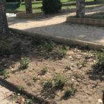 Zona del parque de los jardines que denuncia el Partido Popular.