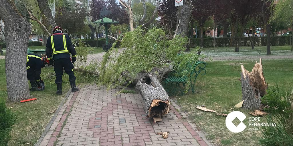 Los bomberos fueron alertados para retirar el árbol caído.