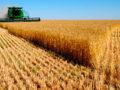 La cosecha de cereal en Castilla y León es la segunda mayor de los últimos 35 años Campo